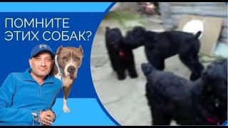 Друзья, помните этих собак ???