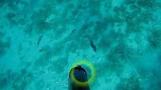 Подводная охота на дораду, Хорватия (дорадо)(Плыву себе вдоль берега, инспектирую вверенную территорию. Метрах на 6-и вижу дораду и морских карасей. Кара..., 2011-12-09T22:33:07.000Z)