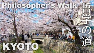 Kyoto, Philosopher's Walk (哲学の道) Walking in Cherry Blossom Season [4K] POV
