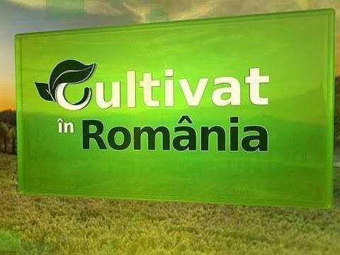 Cultivat in Romania: Despre preturile mici si falimentul ce ameninta producatorii agricoli