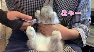 Bunny 'Popo' How to cut his nails!