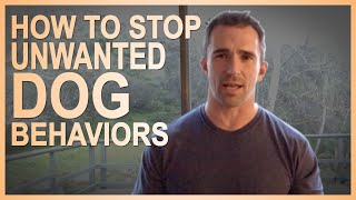 How to STOP Unwanted Dog Behaviors