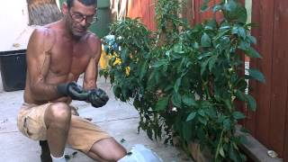 How-to, Jalapeno harvest 8-6-2012 @ my home, 91324