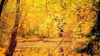 """Peaceful Relaxing Instrumental Music, Meditation Calm Music """"Autumns Winds"""" by Tim Janis"""