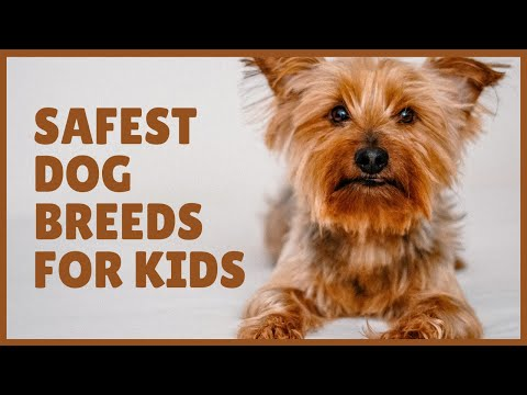 Safest dog breeds for kids | Part 2 | Top Rated