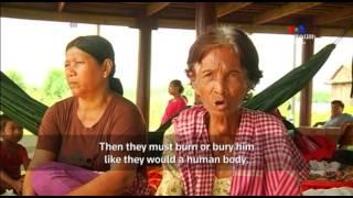 NO COMMENT  Կամբոջայի բնակչուհին հավատացած է, որ իր որթեգրած հորթը վերակենդանացված ամուսինն է