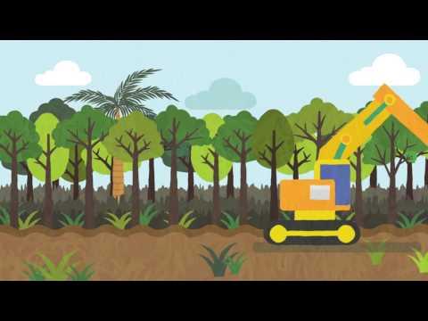 Mari Mengenal Ekosistem Gambut