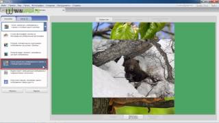 Как создать коллаж в Picasa(Обучающий видео ролик по созданию коллажей в Picasa от winupdate.ru. Наш сайт: http://winupdate.ru/ Наше видео: http://winupdate.ru/video/..., 2014-04-18T10:04:02.000Z)