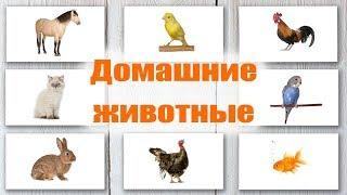 Домашние животные. Карточки Домана. Обучающие карточки для детей