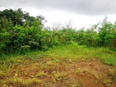 Exotic Property for sale in Bali, land for sale in Ubud Bali -- TJUB283