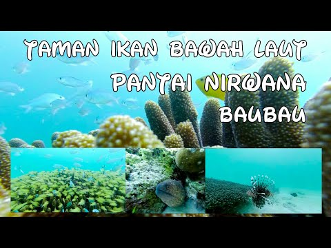taman-ikan-bawah-laut-|-pantai-nirwana-|-baubau-|-sulawesi-tenggara