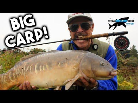 Even Bigger Carp on the Fly! | TAFishing