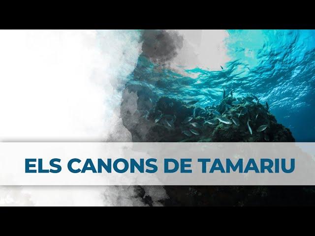 2 Little Divers | Els Canons de Tamariu (Aigua Blava)