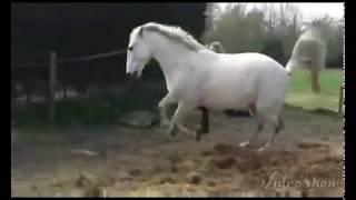 Когда лошадь может лягнуть...