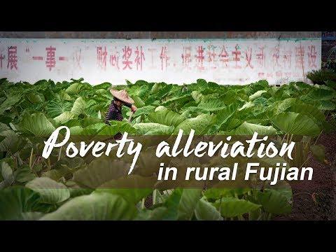 Live: CGTN visits rural Fujian 直播:CGTN探访精准扶贫一线-福鼎产业崛起之路
