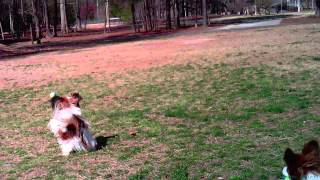 Advanced Recall Distraction Dogs Training At 2 Dog Parks
