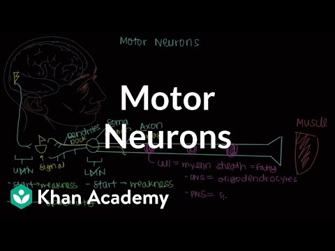 Motor neurons | Muscular-skeletal system physiology | NCLEX-RN | Khan Academy