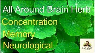 Gotu Kola: All Around Brain Herb Unlike Any Other