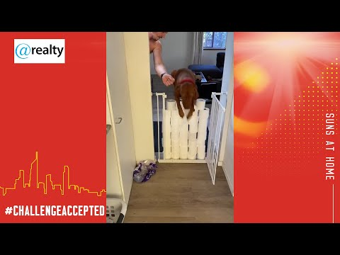 @home With @realty: Dog Challenge #2