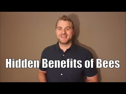 A few bee facts you might not know and the hidden benefits of bees