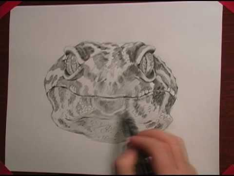 leopard gecko drawing youtube