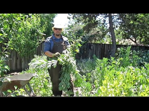 Keepin' It Clean | Springtime Garden Maintenance & Tips