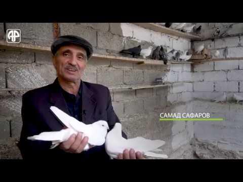 Как выглядят последние оставшиеся голубятни в Душанбе