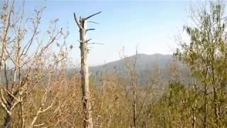 Гора Камера предгорья Сихоте-Алиня в Приморском крае. Поход в мае 2012 года.(Гора Камера Сихоте-Алиньского хребта в Приморском крае май 2012 года. Высота горы 540 метров. Но такие красивые..., 2012-05-15T14:27:21.000Z)