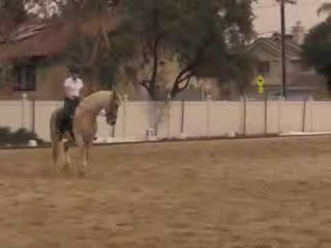 Emily & Majesty - dressage clinic