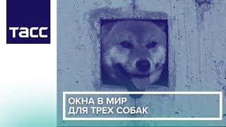 Окна в мир для трех собак