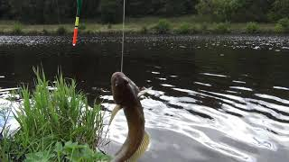 Вспоминаем лето Летняя рыбалка на реке