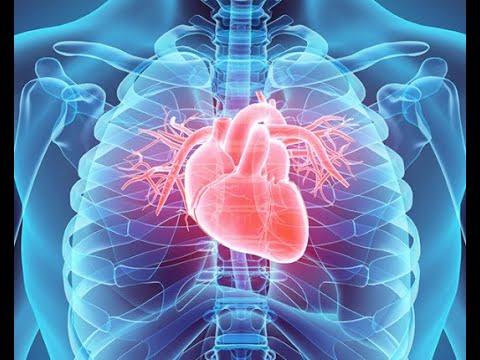 Physiology | CVS |  lecture 7 | Circulatory shock | April 21 2018   | Dr.Nagi | Arabic