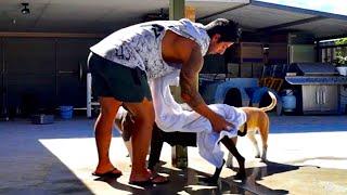 Hamile Köpek Yıkanırmı Yıkarken Nelere Dikkat Etmeliyiz?