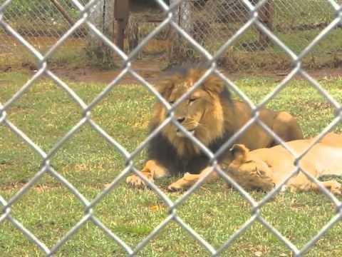 2011 02 16 Nairobi Zoo