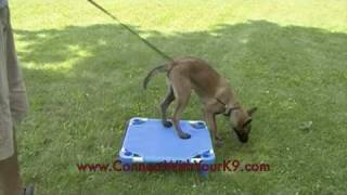 Puppy Training In Buffalo, Ny With K-9 Connection, Free Shaping The 'place' Command