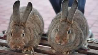 Wrześniowa giełda ozdobnego ptactwa i zwierząt futerkowych w Połańcu