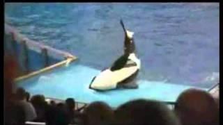 Orca se revela Contra su entrenador