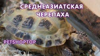 Среднеазиатская сухопутная черепаха - уход и содержание дома