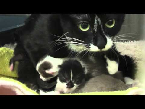 Mama Cat and 2 Day Old Kittens