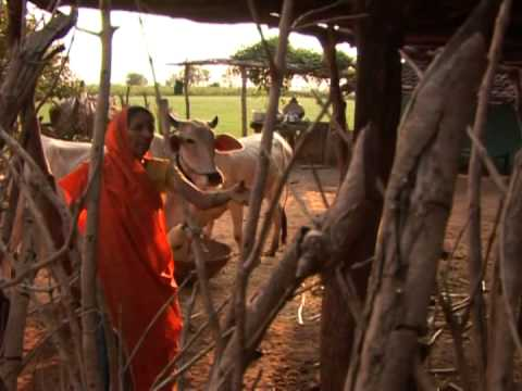 NREGA-MP--Five Short Films on MGNREGA--