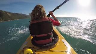 Sea Kayaking with Dolphins, Kaikoura