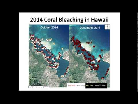 Preparing for Coral Bleaching - Outlook and Lessons in Response