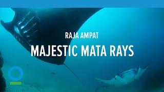 Majestic Manta Rays Glide Through the Seas! Raja Ampat, Indonesia | Conservation International (CI)