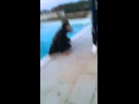 Epic pool fail 2015 youtube for Epic pool show