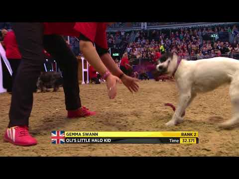 The Kennel Club ABC Dog Jumping Grand Prix at Olympia 2017