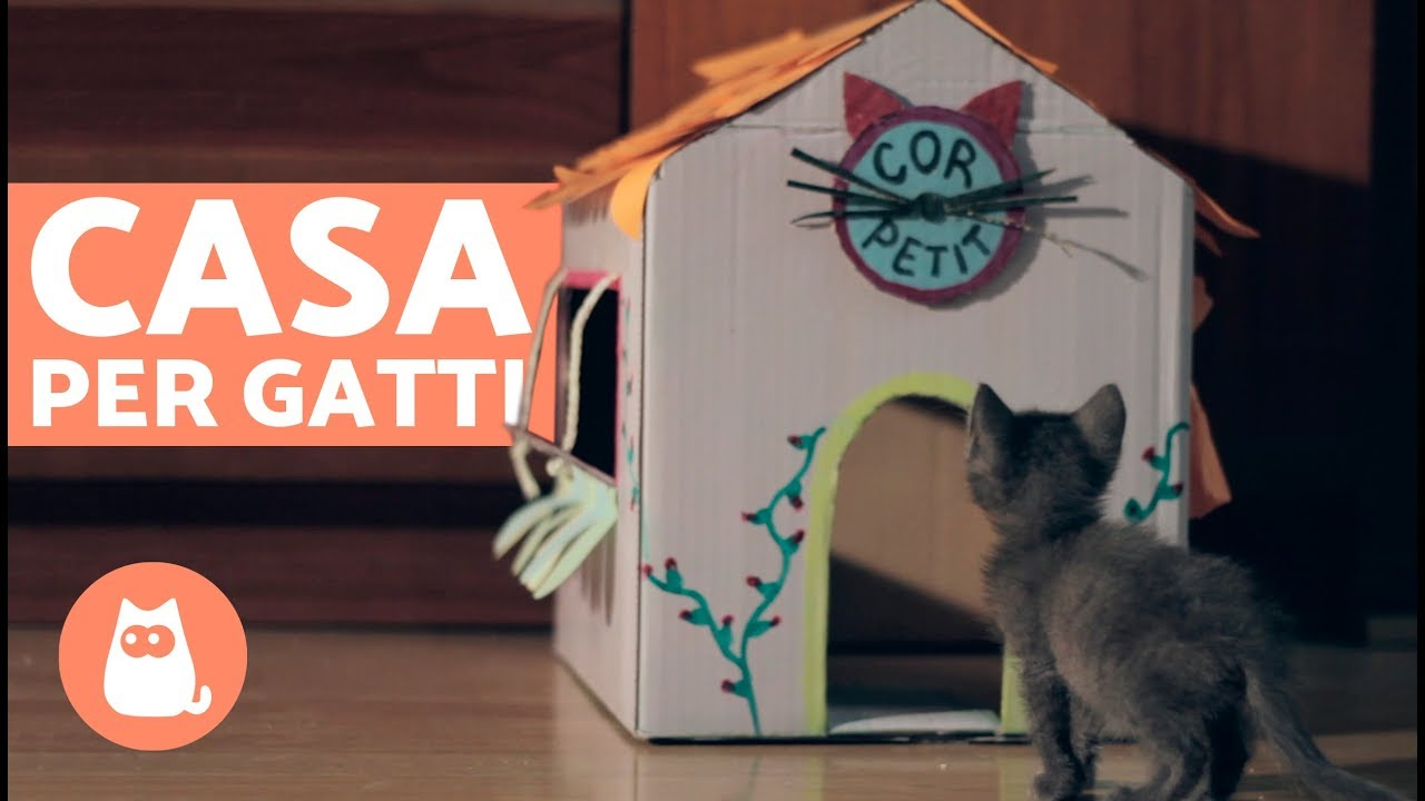 Cuccia Gatto Fai Da Te casa per gatti in cartone fai da te 🏠🐱 come costruire una casa per gatti!