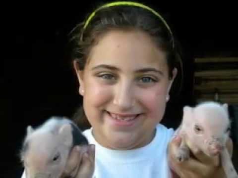 Call 815-600-6464-Animal Rental,Animal Rentals,Animal Rental Company Chicago,Petting Zoo Rental,Pigs