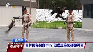 墨西哥軍校設國鳥保育中心 呵護折翼金鷹