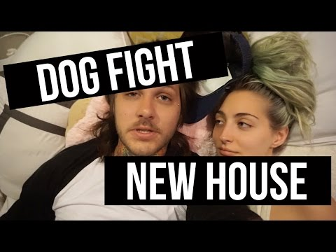 NEW HOME/DOG FIGHT | Day 81