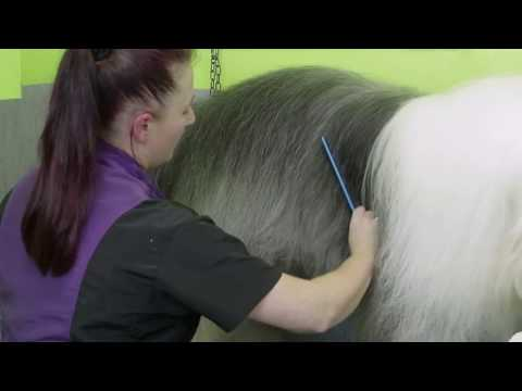 Removing Knots from Double-coated Breeds - Groomers Gallery Preview